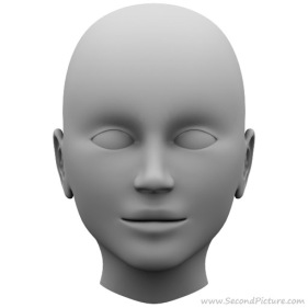 human_head_reference_picture_front